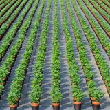 Perennials & Herbaceous Plants